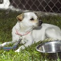 Animal Assistance League