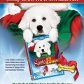 Holiday Pet Tips from The Search For Santa Paws with Nicole Zuehl