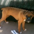 Amber Dog Alert!